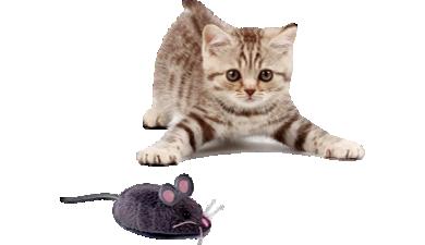 Kattelegetøj m. Mus