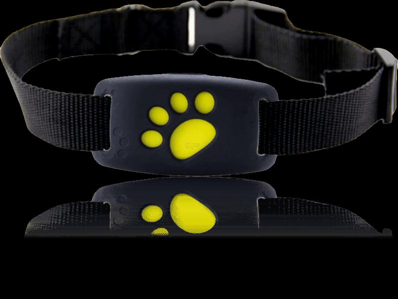 GPS Tracker til Kat