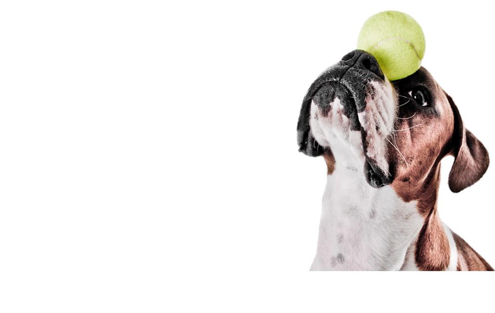 Tilbehør til Hundetræning