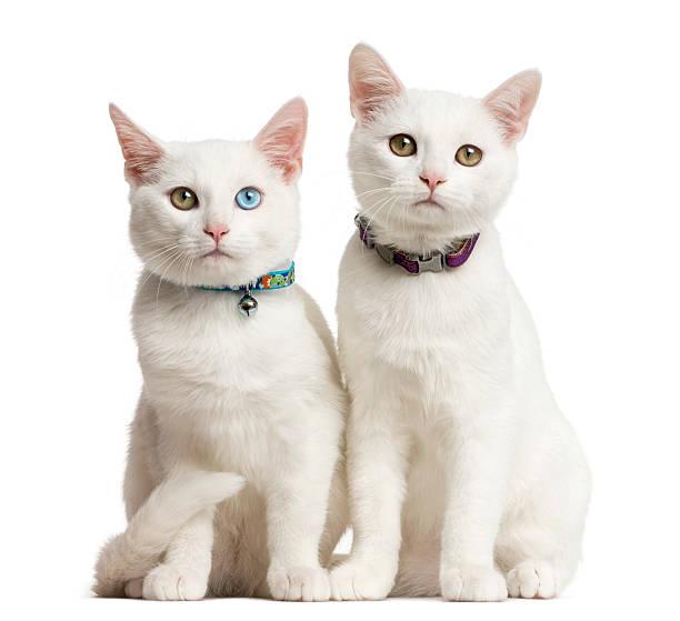 Katte Halsbånd